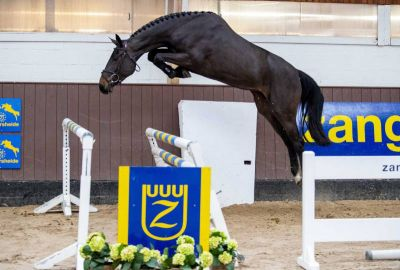 € 94.000 for Dominator Z daughter Devidanga SW Z