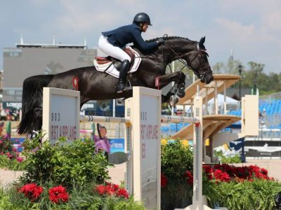Full brother/sister to 1m65 jumping jaguar vd berghoeve