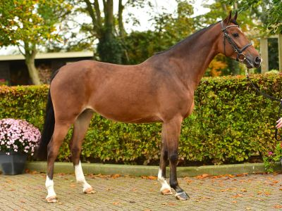 Broodmare 'no mercy' in foal to emerald