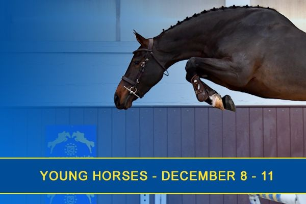 Young Horses December 2018