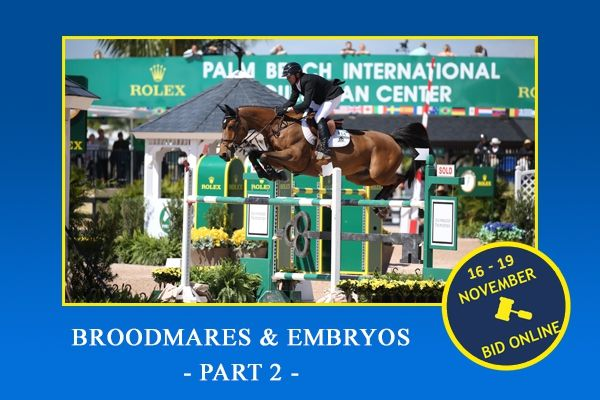 Broodmares and embryos November 2019 - part 2