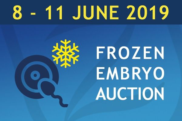 Online Auction Frozen Embryos