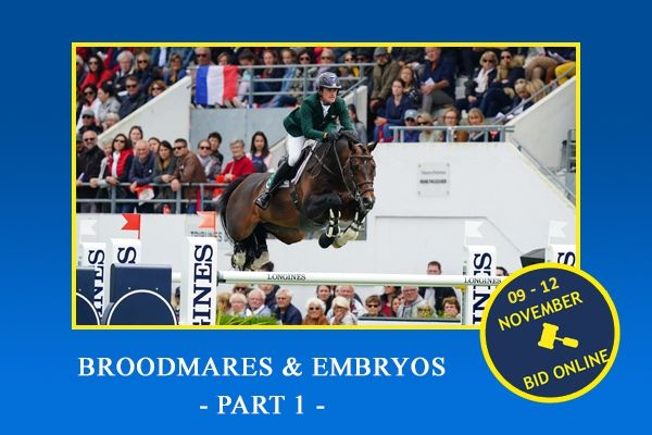 Broodmares and embryos november 2019 - part 1