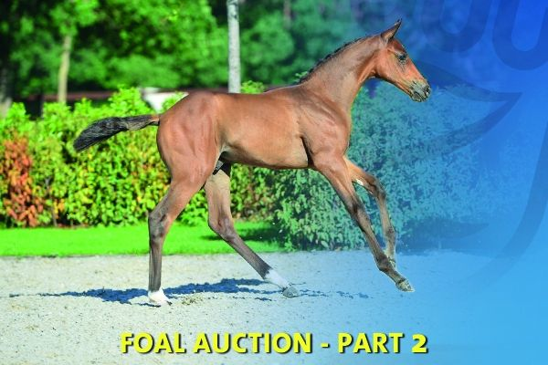 Online Auction: Foals 2020 Part 2