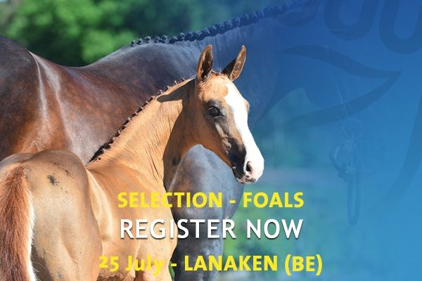 Auction Selection Lanaken July 25