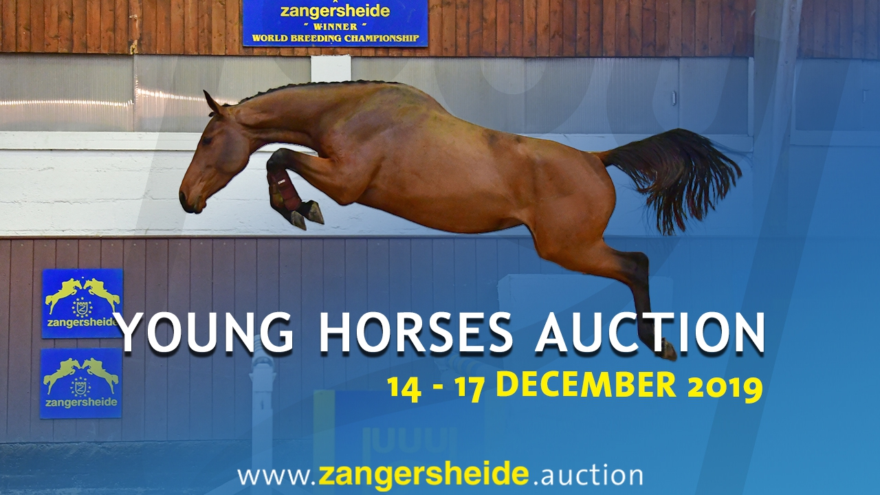 Young Horses December 2019