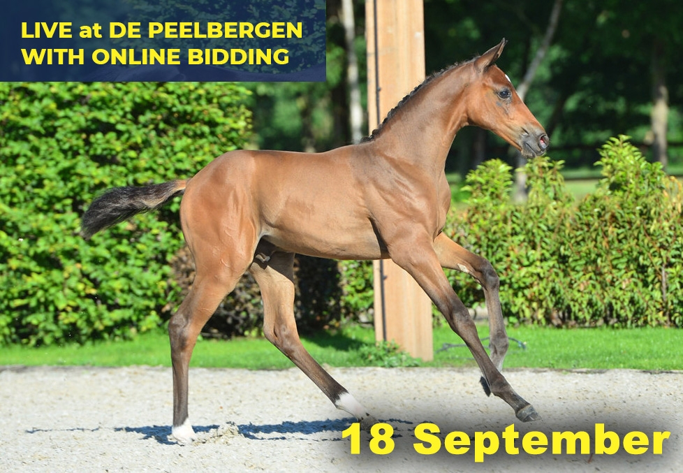Quality Auction 18 September 2020