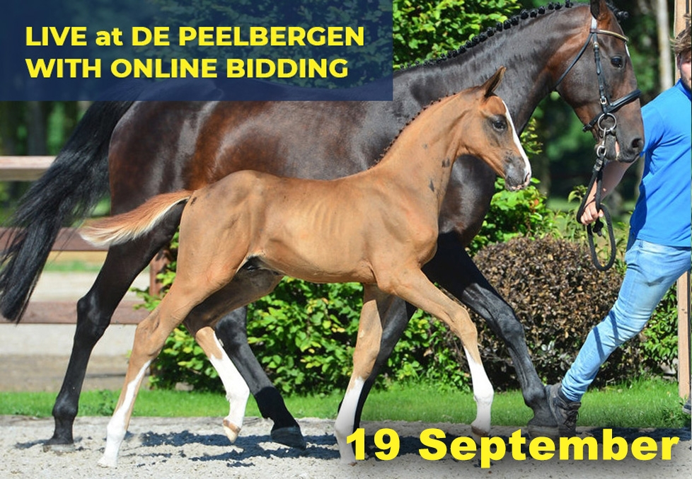 Quality Auction 19 September 2020