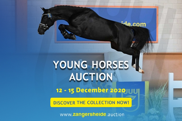 Young Horses December 2020